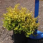 #3 plant
