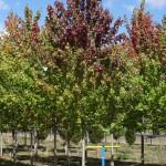 """3"""" B&B tree"""