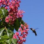 Flower and Hummingbird