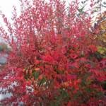 in a fall landscape