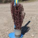 #1 plant