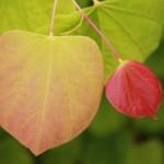 New foliage