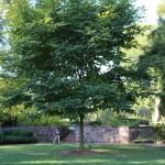 In Longwood Gardens