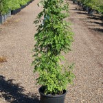 #5 plant