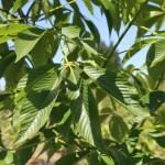 early summer foliage